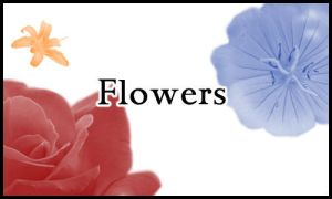 Flower Brushes by marvin9martian