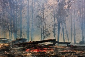 Burnt Out Forest by DrewHopper