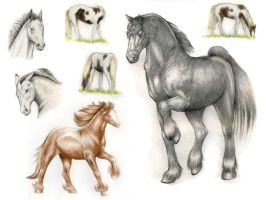 Horse Sketches by FeatherGale