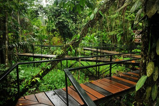 Amazon walkways by wildplaces