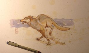 Daily Watercolor animal Sketch: Wolf by RM-WINCH
