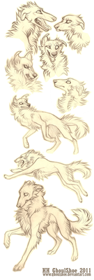 Borzoi sketches by CanisAlbus