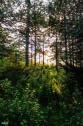 Trees Sunlight and Potherb by sinanrby