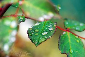 Droplets of Life. by PlanningPlantNerd