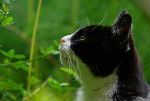This cat is called Poupouce by stephane-bdc