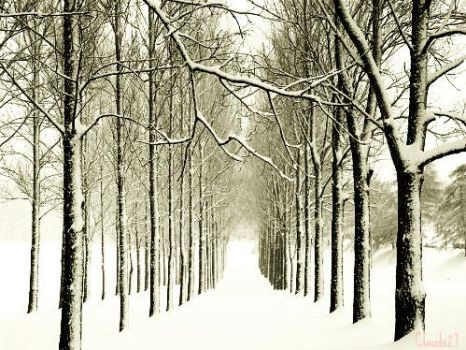 The Winter Trees by clauds27