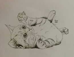 cat sketch by Nadirakat