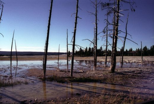 Late Afternoon in Yellowstone by salias