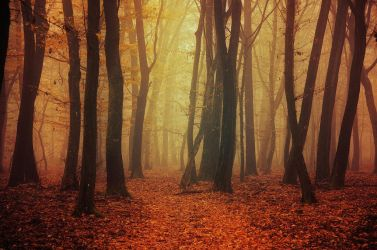 Fading Autumn I. by realityDream