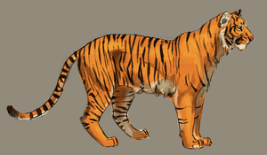 Tiger  by Owlsparky