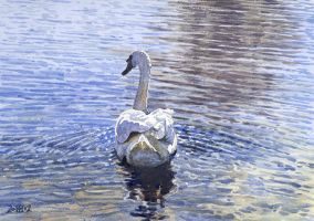Swan on the Thames by treeshark
