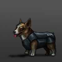 Corgi by KidneyShake