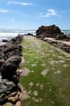 Jetty covered by green algae by shkyo30
