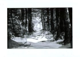 Forest by nr150
