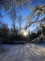 Spring is coming soon. by KariLiimatainen