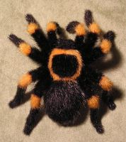 Mexican redknee tarantula by ellis-animals