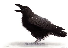 Little raven in the snow by MobidicMobidic