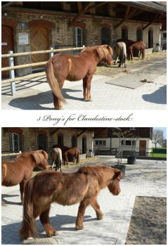 5 pony's by clandestine-stock