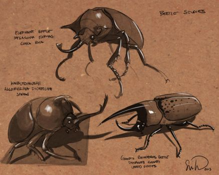 Beetle sketches by samtung