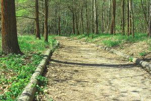A Path to the Forrest by Hrasulee