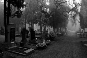 Maastricht's old cemetery by orinu