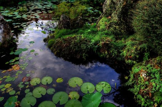 Water Lilies I by PaulWeber