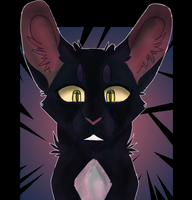 Warrior cats - Ravenpaw by grubbymutt