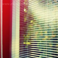 Shutter vision by EliseEnchanted