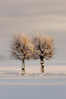 Two Trees in the Snow by Idarlm