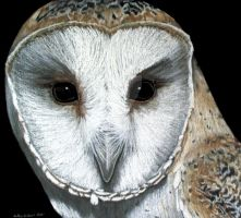Barn Owl by Tiny-ChiKn
