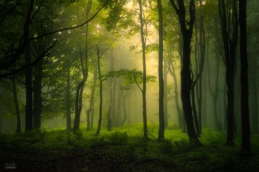 -When the light came into our kingdom- by Janek-Sedlar