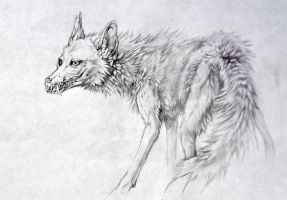 White Coyote by Exileden