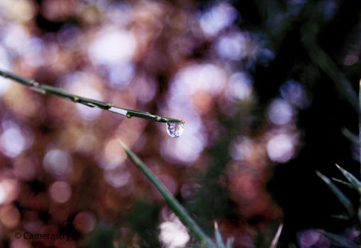 A Whimsical Drop by Camerastry