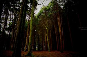 Woods3 by P3droD