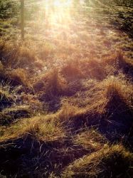 Frosty spring-grass by Voltaire666