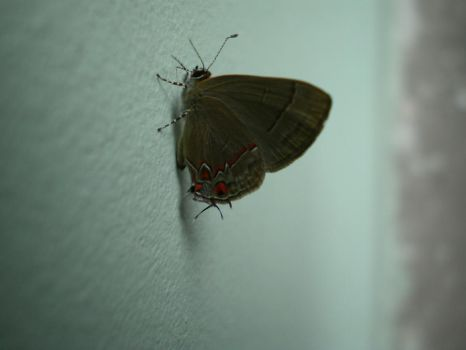 Butterfly on the wall by mononokee