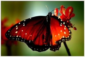 Just like a butterfly... by asymons