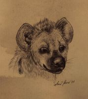 spotted_hyena_portrait by Anatoliba