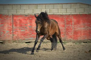 DWP FREE HORSE STOCK 60 by DancesWithPonies