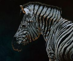 Zebra by IlseVerbeek