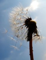 blowing by the wind by Dieffi