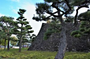 Pine trees and stone wall in Kofu castle by Furuhashi335