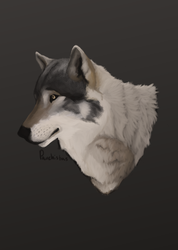 Wolf (painting practice) by Pauchisbas