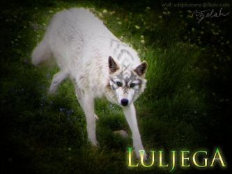 Request 2 Luljega by Azelah