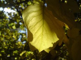 yellow leaf by mossi889
