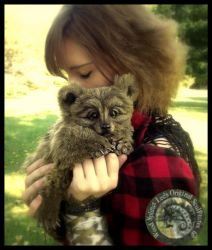 SOLD HAND MADE Poseable Baby Grizzly Bear Cub! by Wood-Splitter-Lee