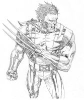 Wolvie lines by mikemaluk