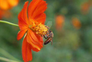 Orange Flower and little bee by Jaja-panda