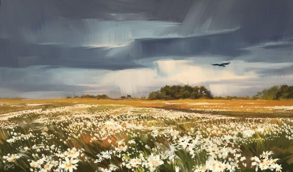 Landscape with camomiles by O-l-i-v-i
