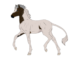N2843 Padro Foal Design by casinuba